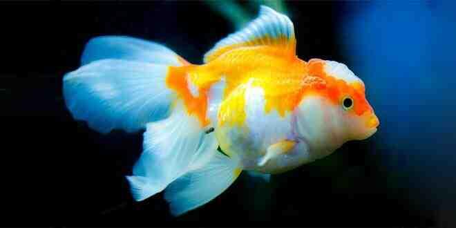 Quand éteindre la lumière de l'eau de l'aquarium