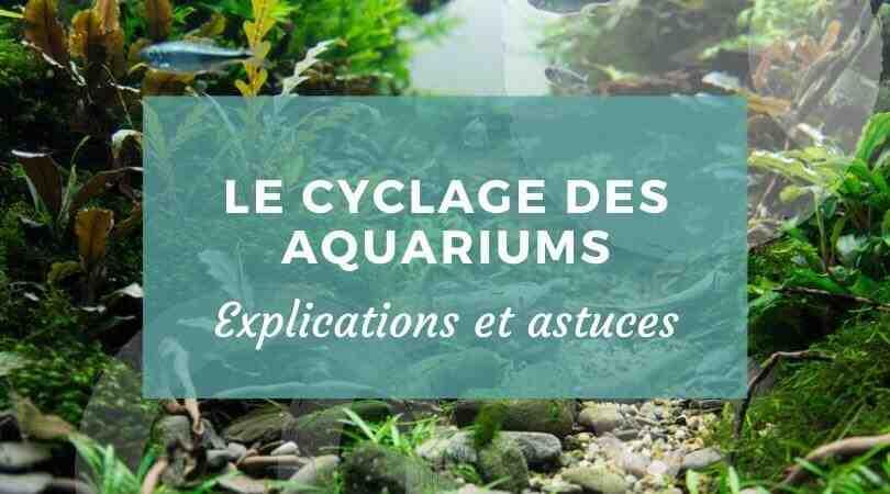 Quand faire le premier changement d'eau dans un aquarium?