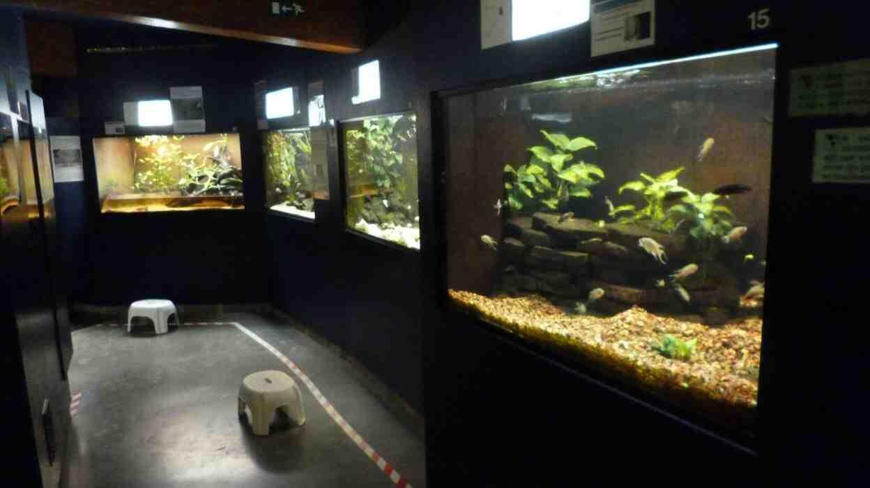 Quand faut-il faire le premier changement d'eau dans un aquarium?