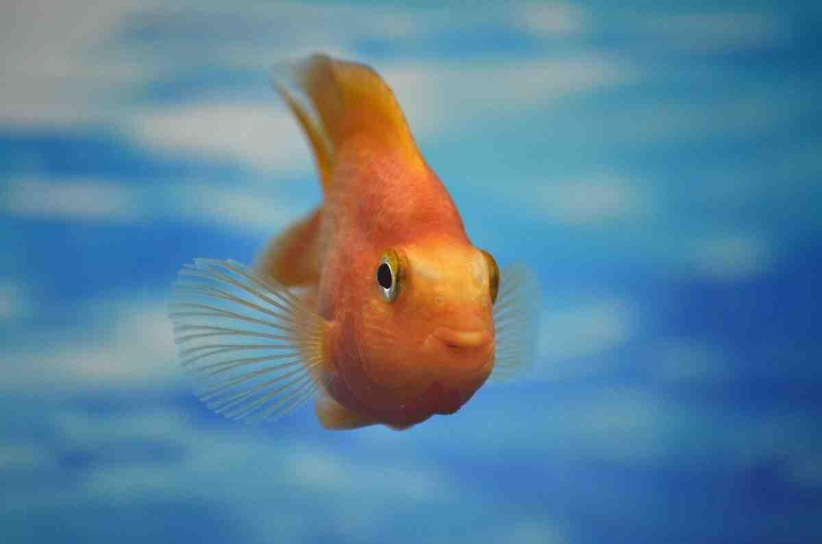 Quand nettoyer l'aquarium?