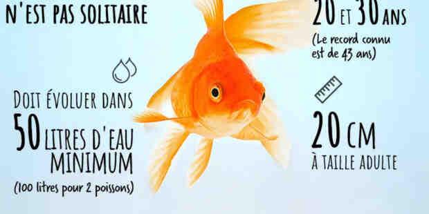 Quel aquarium pour 2 poissons rouge ?