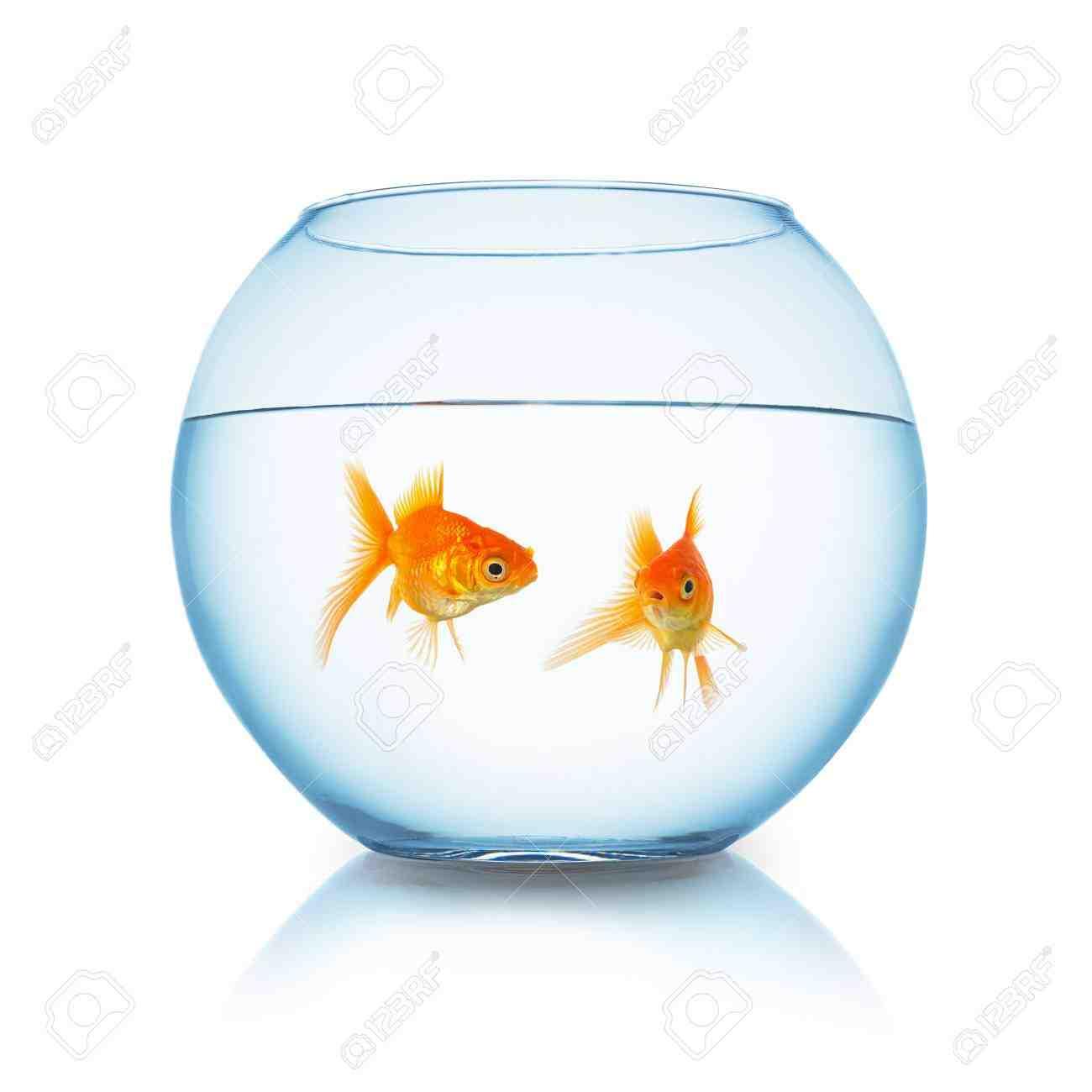 Quel aquarium pour un poisson rouge?