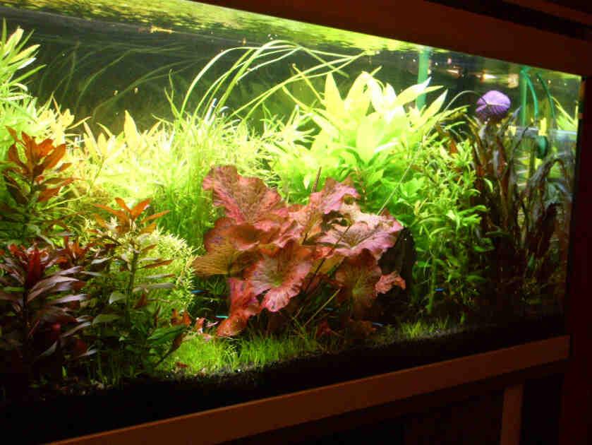 Quel engrais pour les plantes d'aquarium ?