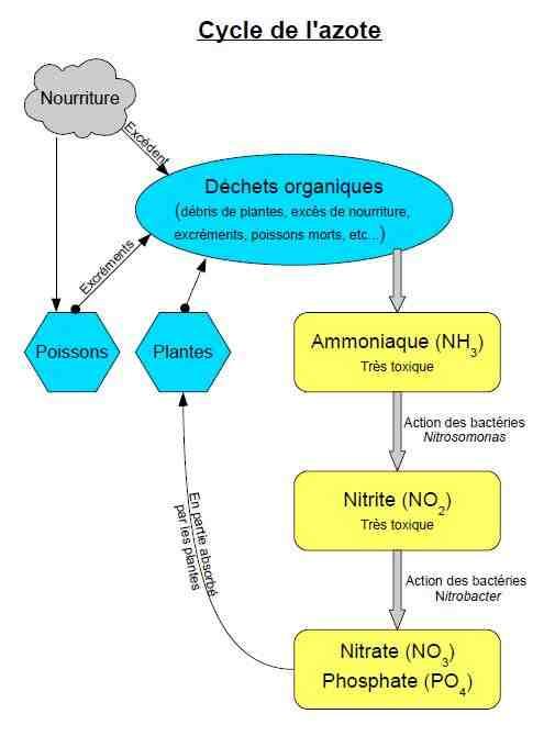 Quel est le niveau de phosphate d'aquarium?