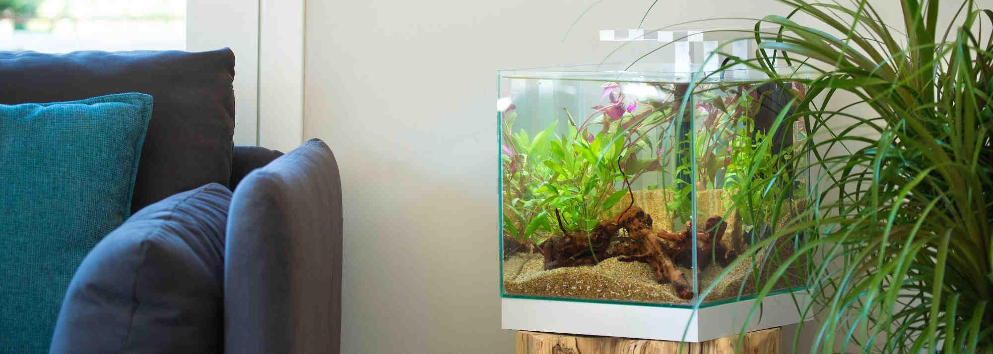 Quel petit aquarium dois-je choisir?