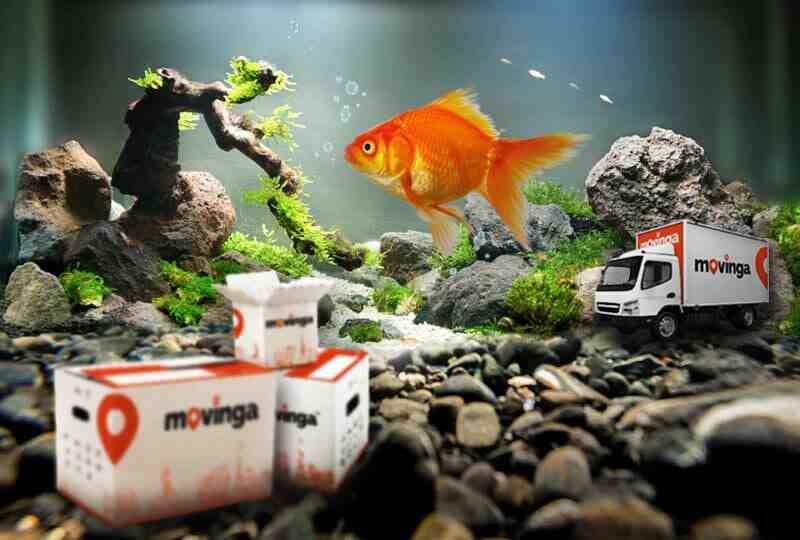 Quel poisson dans un aquarium de 100 litres?
