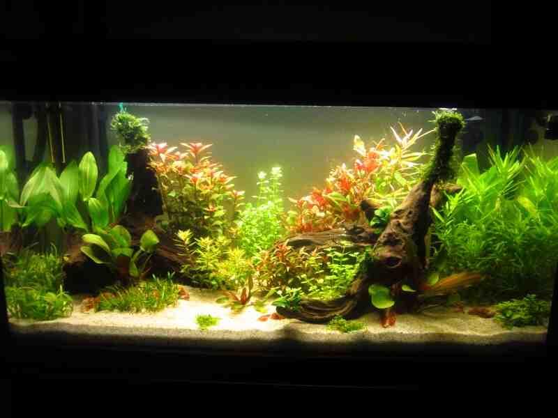 Quel poisson dans un aquarium de 200 l ?