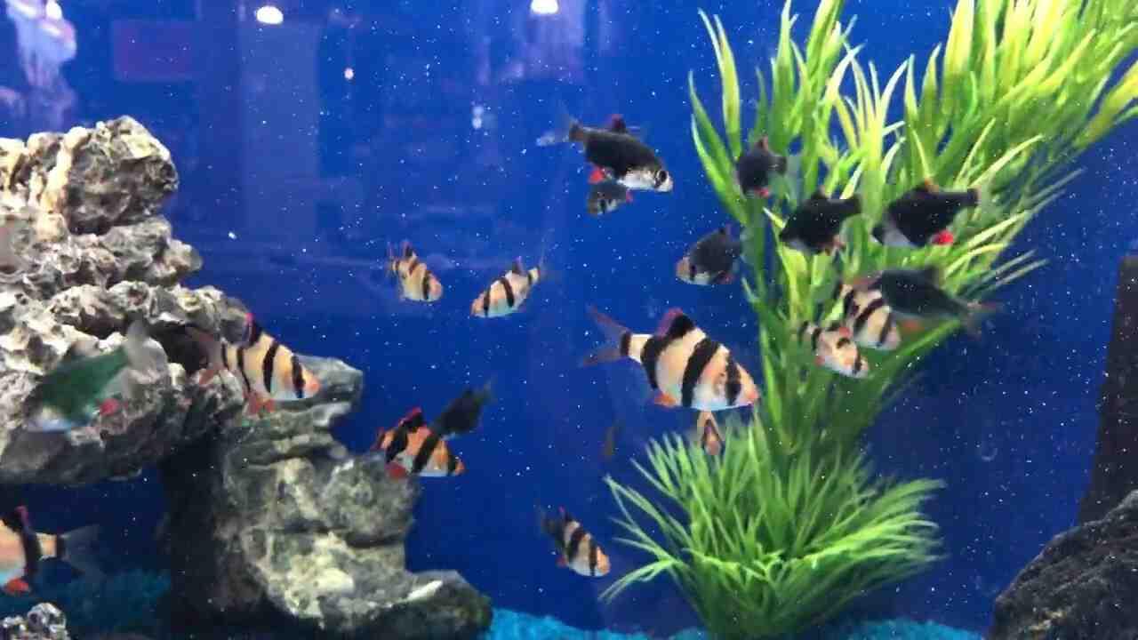 Quel poisson dans un aquarium de 200 l?