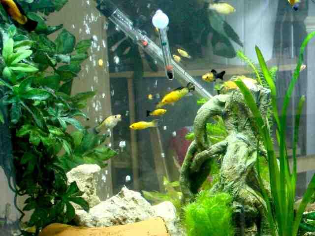 Quel poisson dans un aquarium de 30 litres ?
