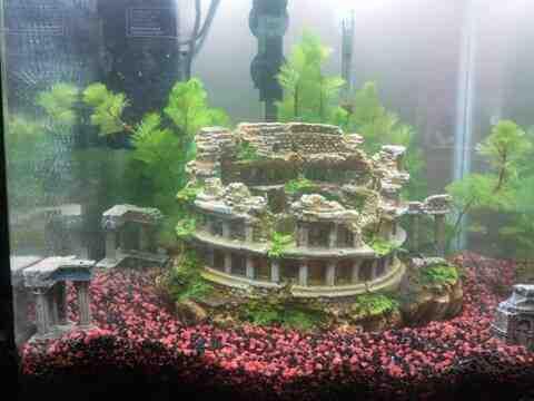Quel poisson dans un aquarium de 40 litres ?