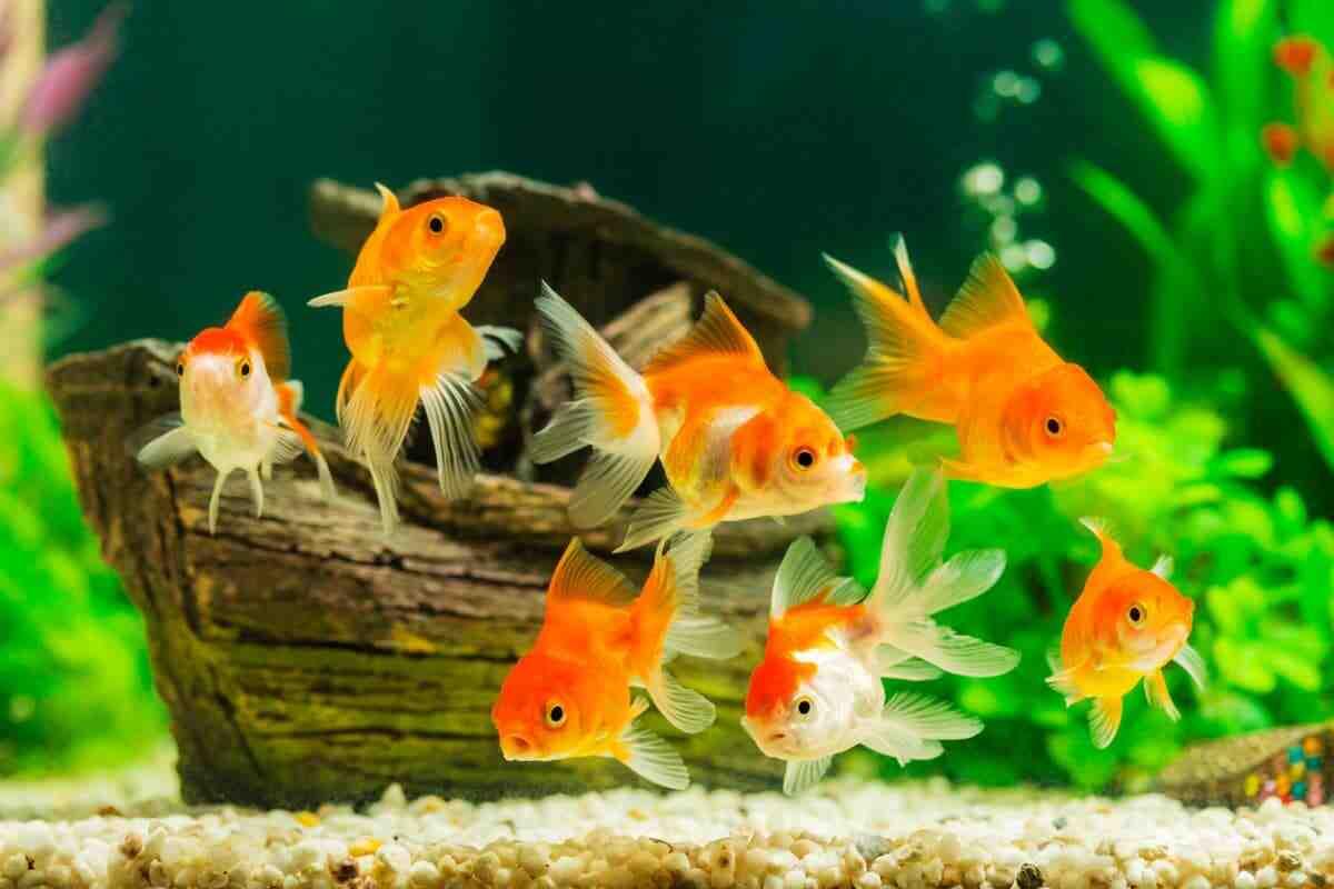 Quel poisson d'aquarium 13L?