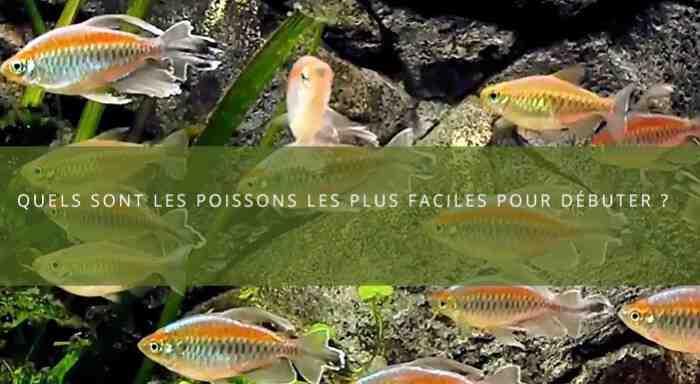Quel poisson d'aquarium de 20 litres?