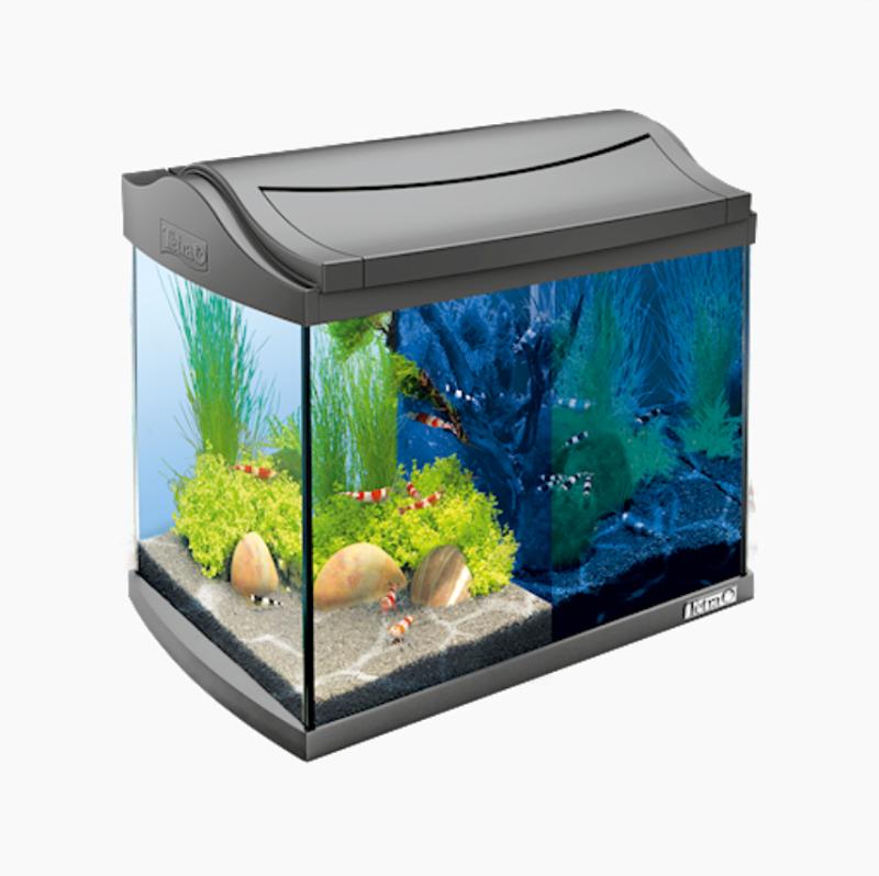 Quel poisson pour un aquarium de 10 litres?