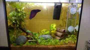 Quel poisson pour un aquarium de 15 litres?