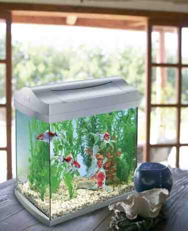 Quel poisson pour un aquarium de 20l ?