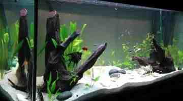 Quel poisson pour un aquarium de 25 litres?