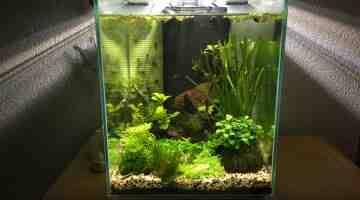 Quel poisson pour un aquarium de 35 litres?