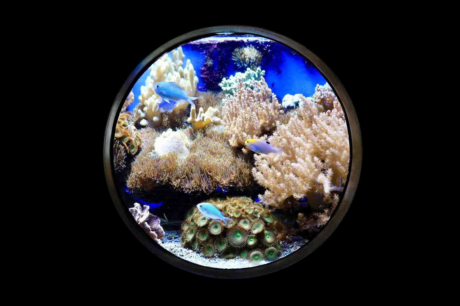 Quelle eau démarre un aquarium?