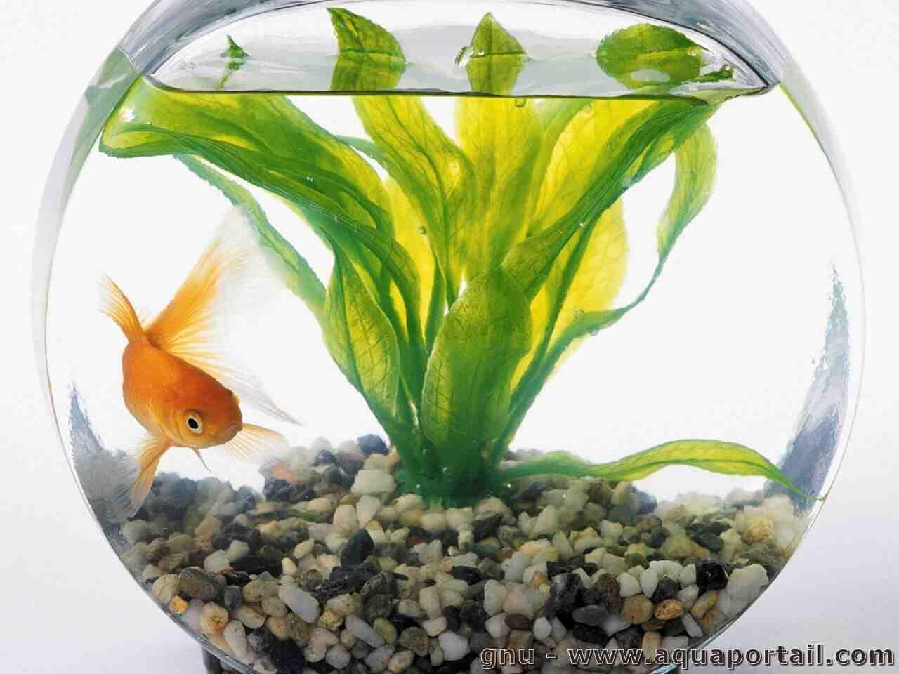 Quels poisson dans un aquarium de 250 l ?