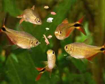 Quels poissons d'aquarium d'eau douce de 400 litres?