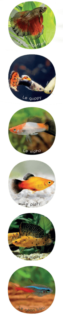 Quels poissons y a-t-il dans l'aquarium?