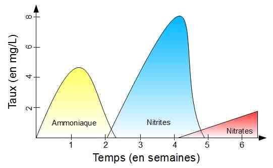 Qu'est-ce que le cycle de l'azote?