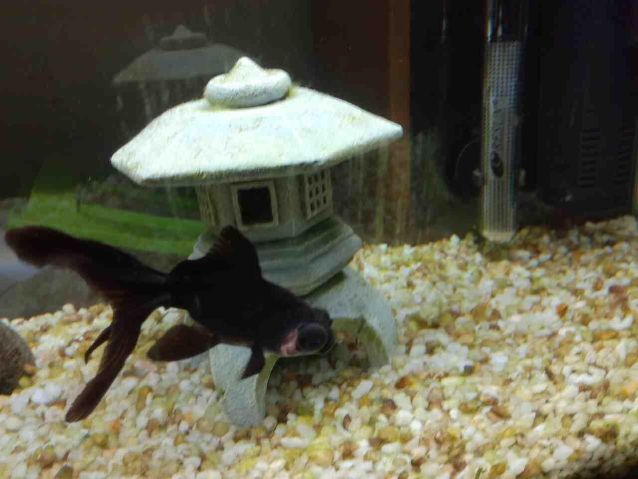 Un poisson peut-il vivre seul?
